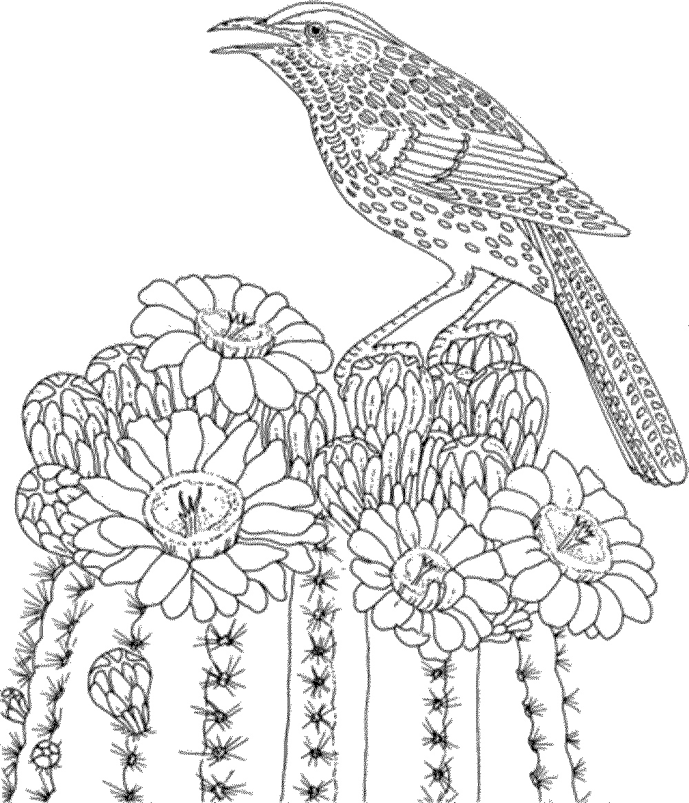 bird coloring pages for adults printable birds coloring pages for adults realistic bird adults for pages coloring