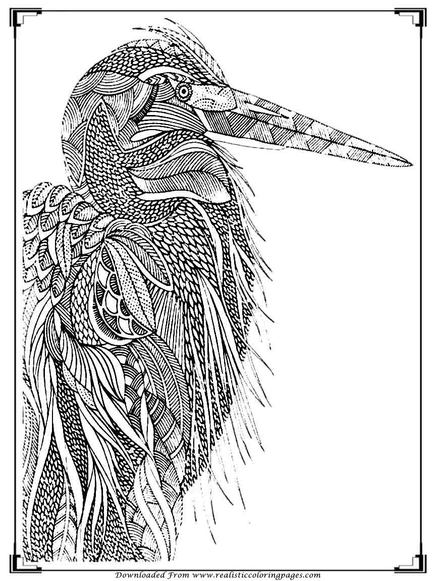 bird coloring pages for adults printable birds coloring pages for adults realistic bird adults pages for coloring