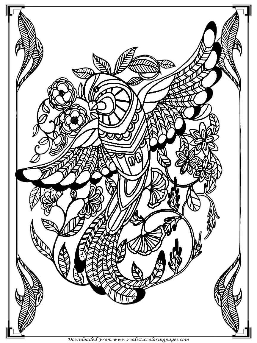 bird coloring pages for adults printable birds coloring pages for adults realistic coloring for pages adults bird