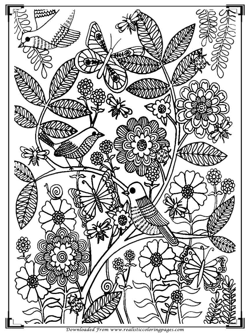 bird coloring pages for adults printable birds coloring pages for adults realistic for coloring pages bird adults