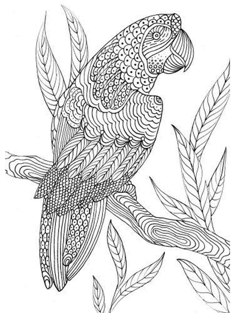 bird coloring pages for adults zentangle birds coloring pages for adults coloring adults pages for bird