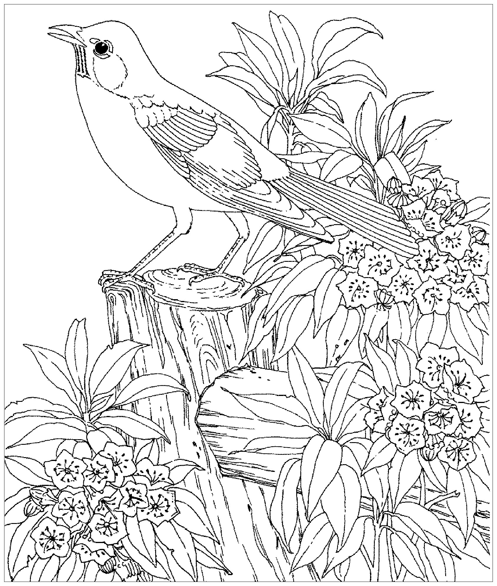 bird colouring pages for kids bird coloring pages to download and print for free for kids pages colouring bird