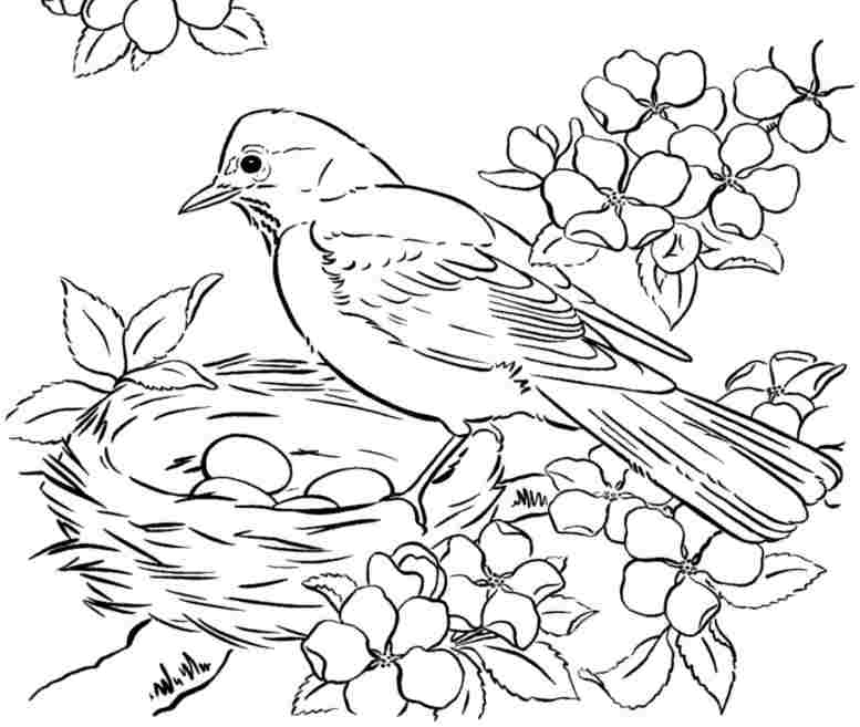 bird colouring pages for kids drawing for kids birds at getdrawings free download for kids bird pages colouring
