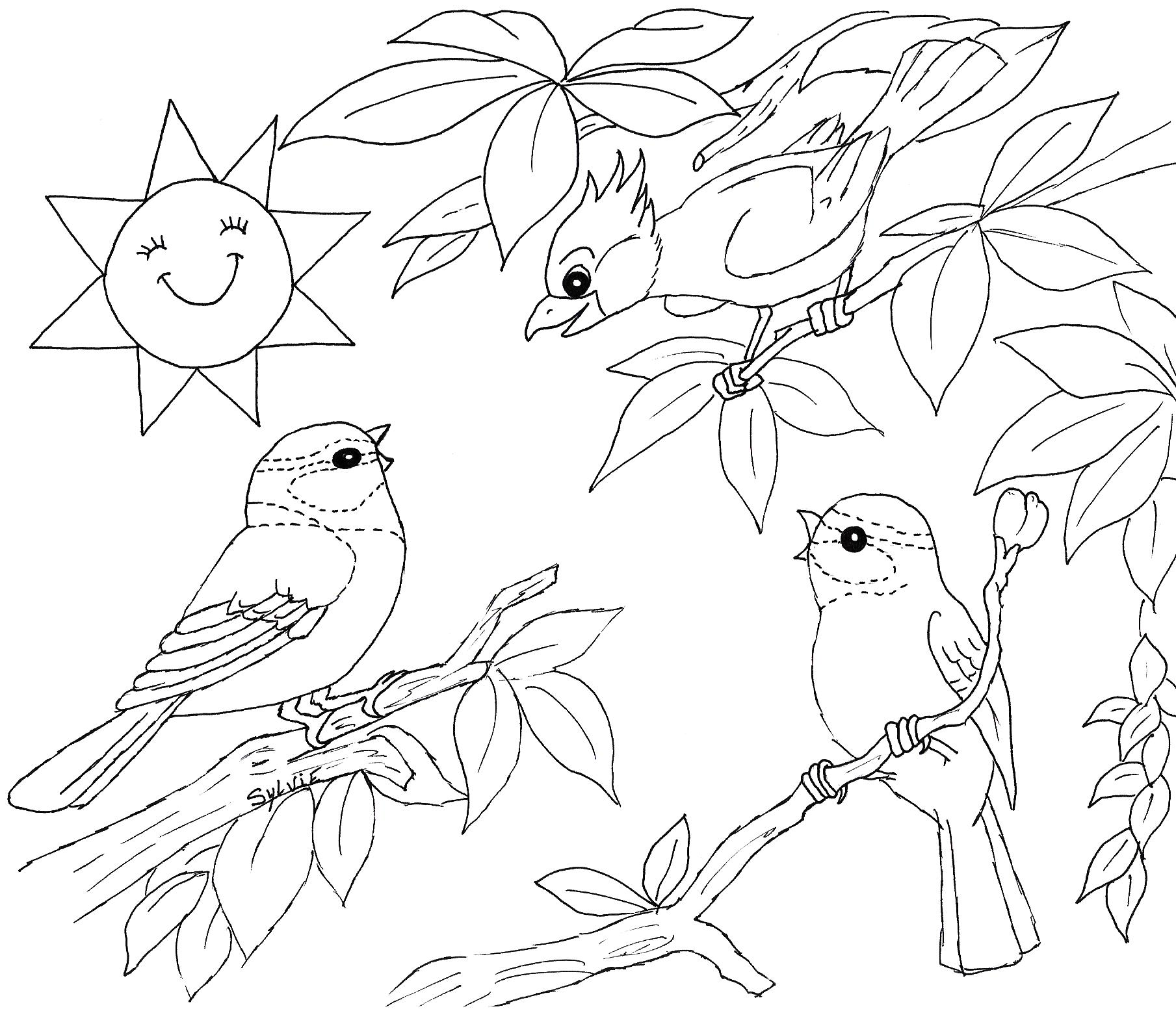 bird colouring pages for kids tweety bird coloring pages kidsuki for pages bird kids colouring