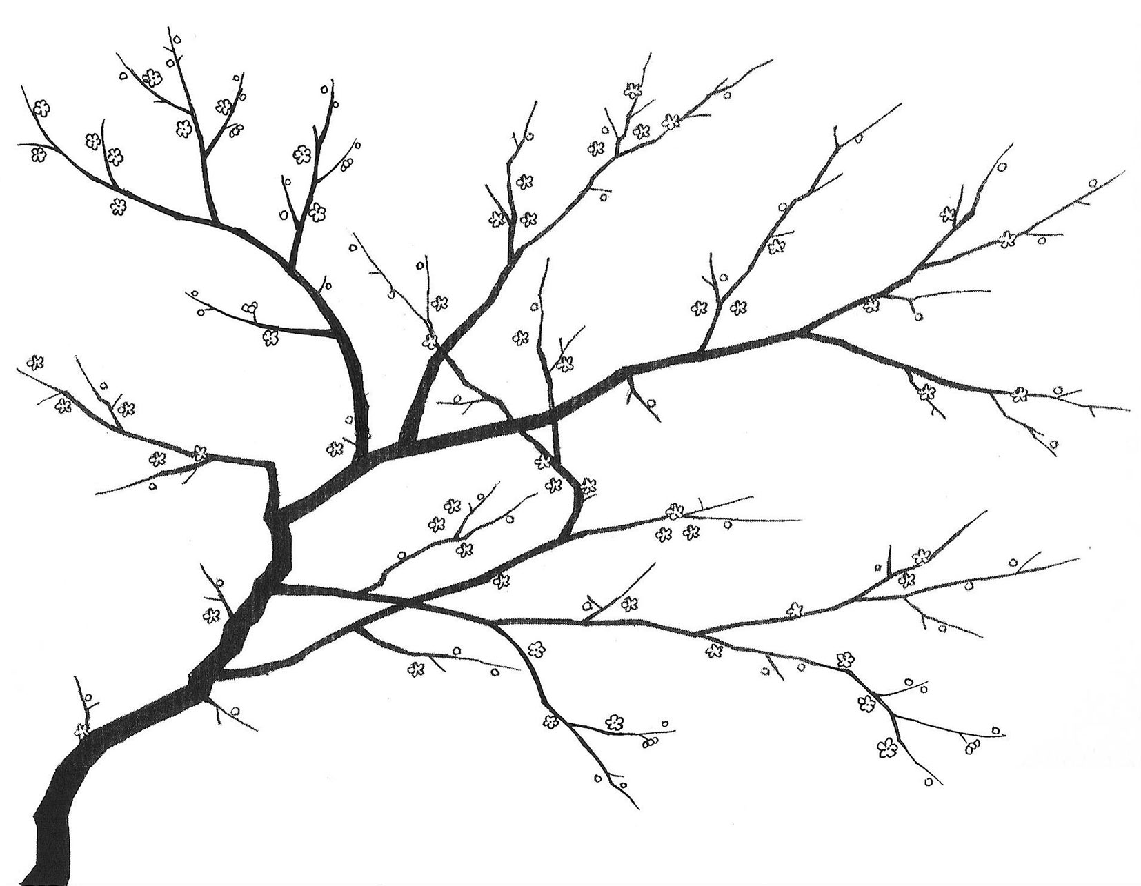 blossom tree drawing cherry blossoms tree drawing at getdrawings free download drawing tree blossom