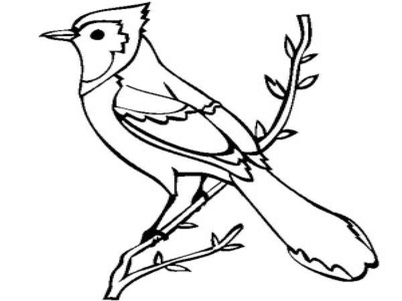 blue jay drawing 208 best images about vintage black white clip art on jay drawing blue