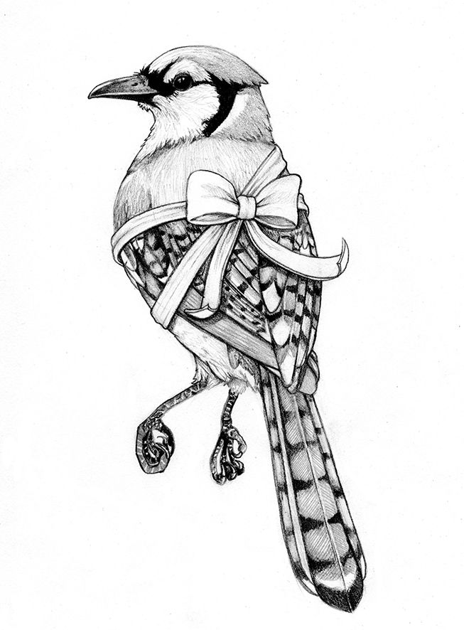 blue jay drawing blue jay drawing by iamtherealbender on deviantart drawing blue jay
