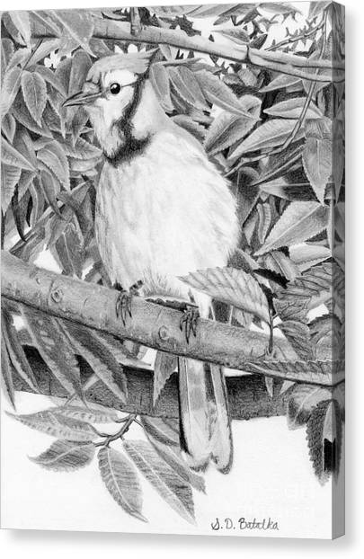 blue jay drawing blue jay drawing pencil sketch colorful realistic art jay drawing blue