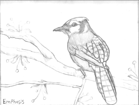 blue jay drawing how to draw a blue jay blue jay drawing