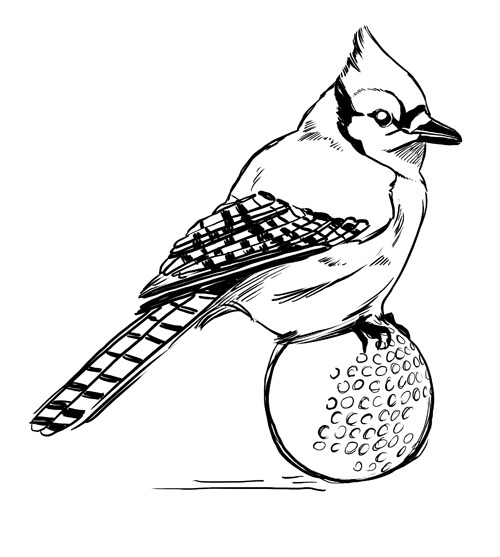 blue jay drawing how to draw a blue jay step by step easy animals 2 draw blue drawing jay