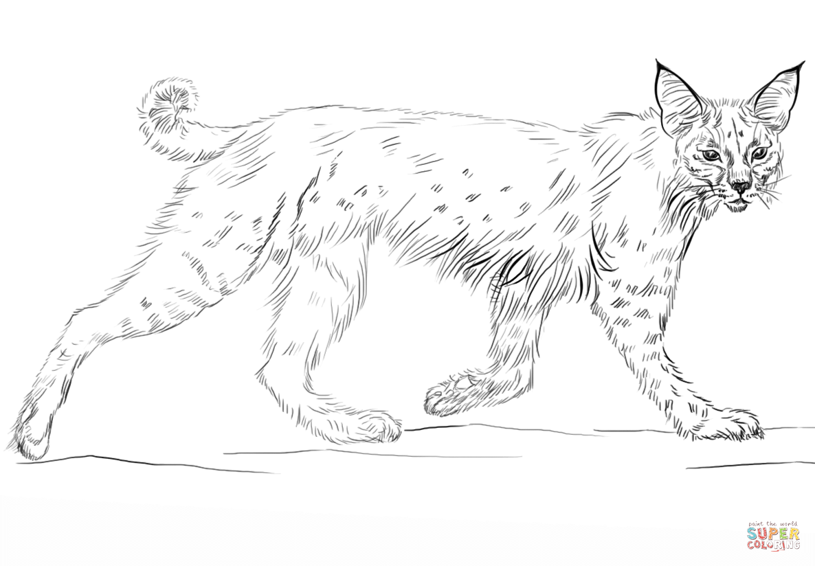 bobcat pictures to color bobcat coloring pages to download and print for free bobcat color to pictures