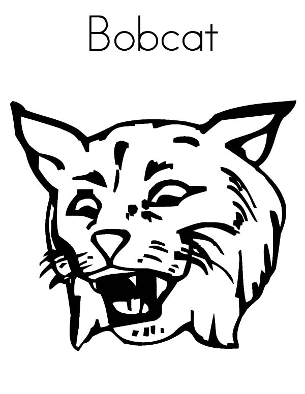 bobcat pictures to color bobcat coloring pages to download and print for free bobcat to color pictures