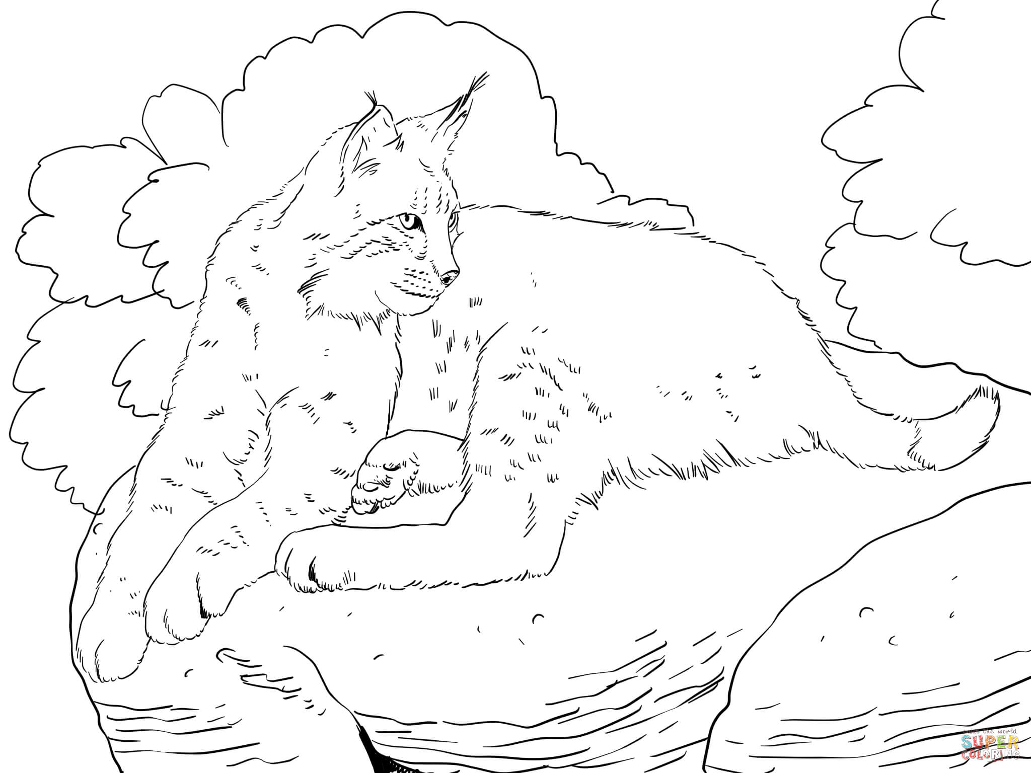 bobcat pictures to color bobcat on a tree coloring pages best place to color bobcat to pictures color