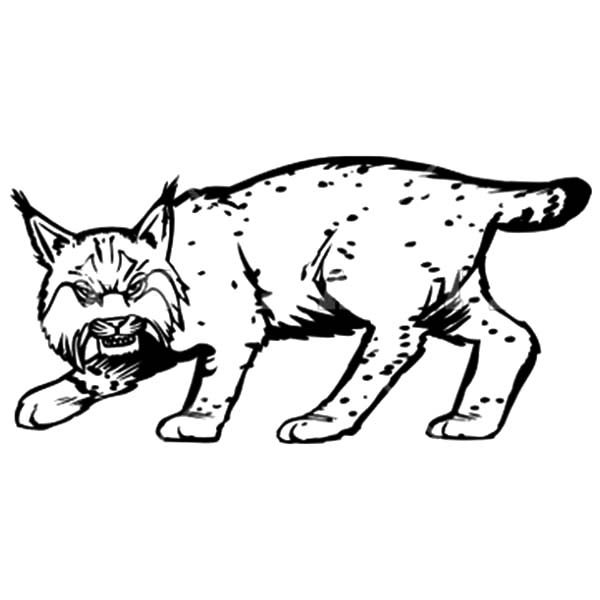 bobcat pictures to color california bobcat coloring page free printable coloring to color pictures bobcat