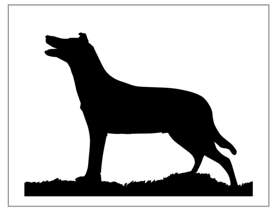 border collie silhouette border collie svg border colly silhouette cliart puppy collie silhouette border