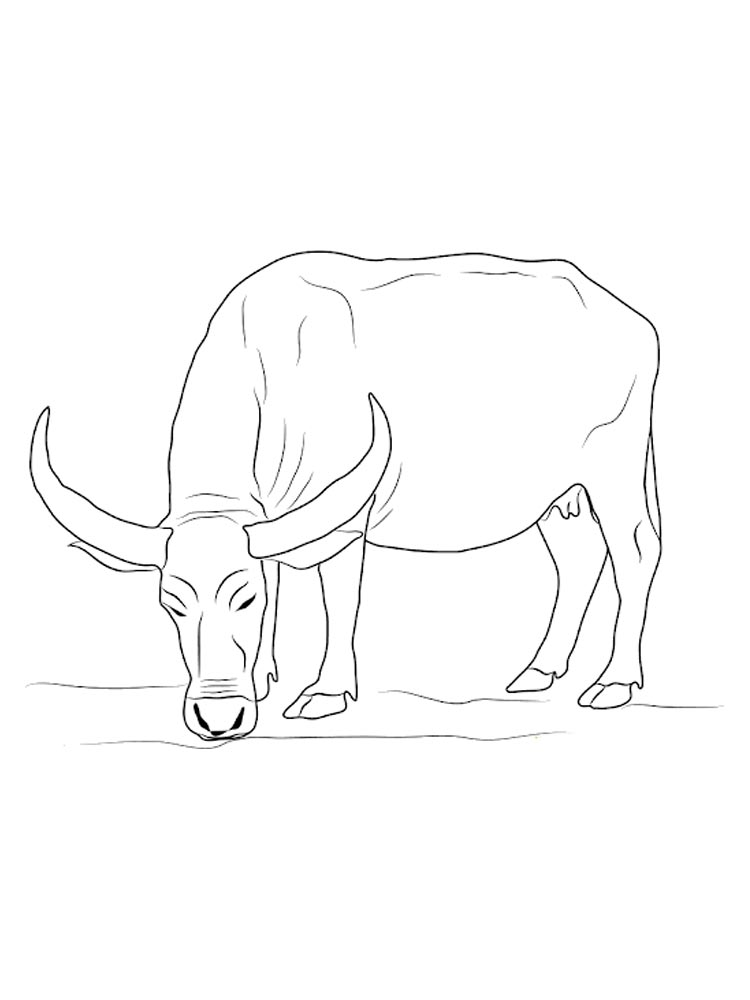 buffalo pictures to color bison coloring pages for kids realistic coloring pages buffalo pictures to color