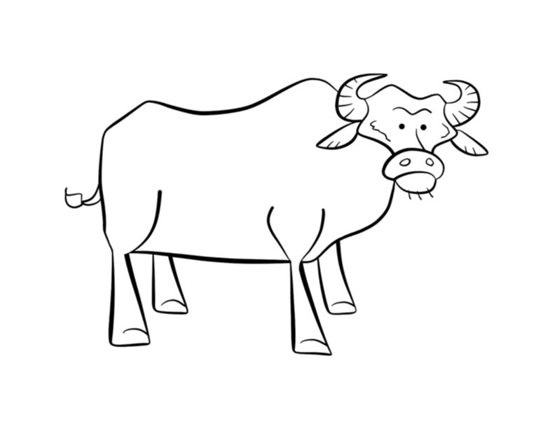 buffalo pictures to color buffalo coloring pages coloring pages to download and print color buffalo to pictures