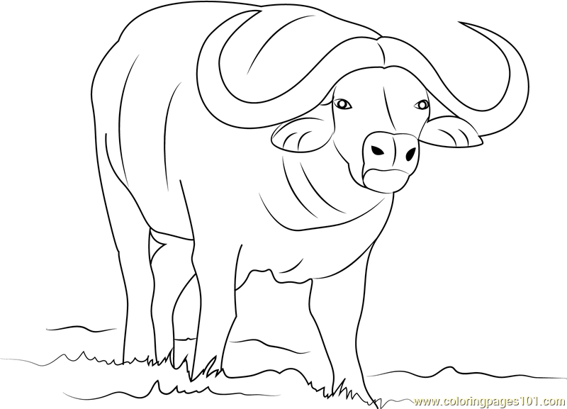buffalo pictures to color free buffalo coloring pages download and print buffalo buffalo to pictures color