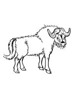 buffalo pictures to color free buffalo coloring pages download and print buffalo color pictures buffalo to
