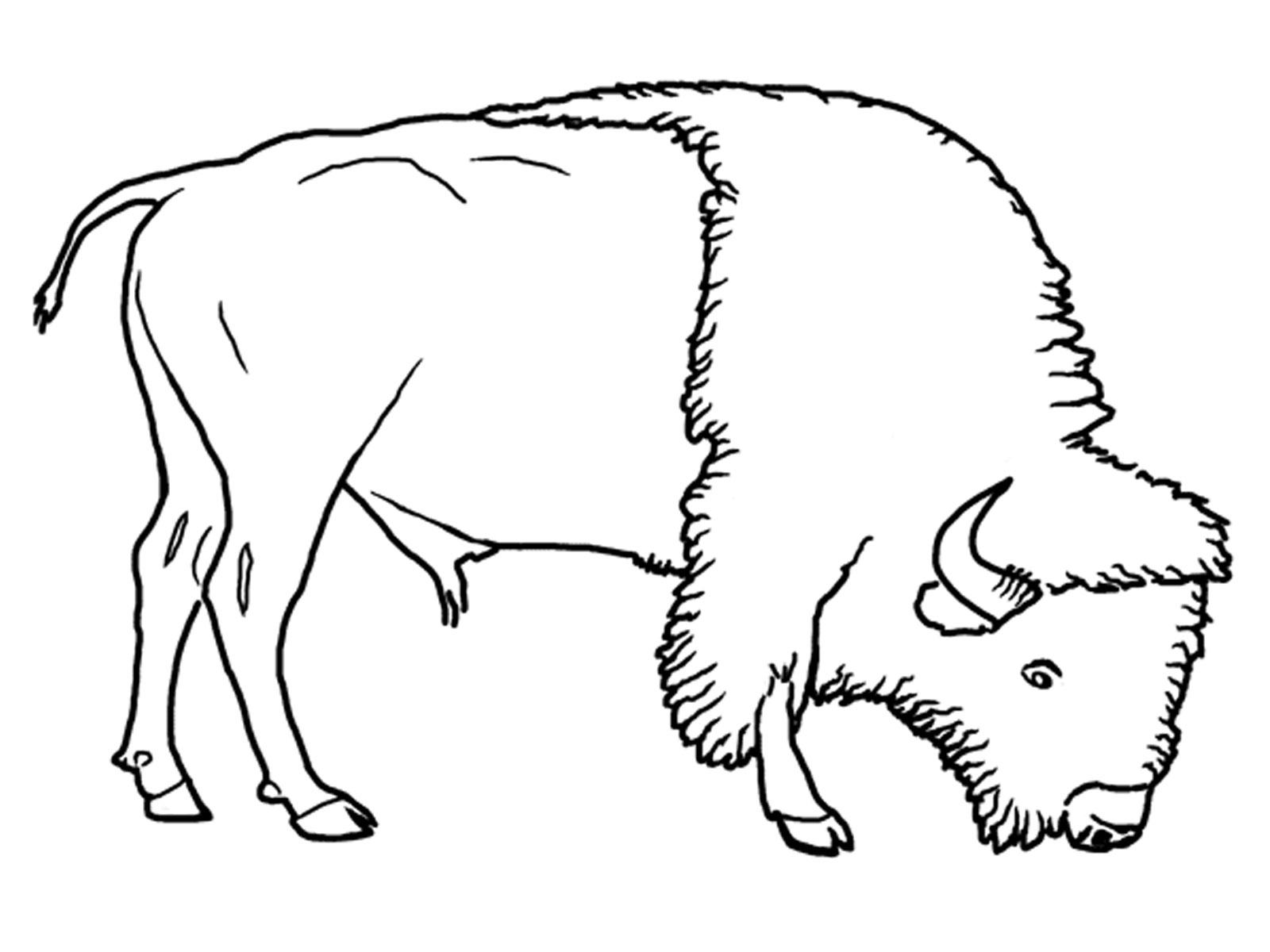 buffalo pictures to color water buffalo coloring page easy coloring page ideas buffalo color pictures to