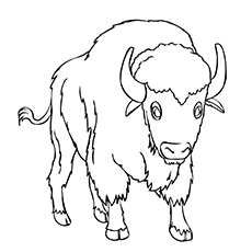 buffalo pictures to color water buffalo coloring sheet pictures buffalo color to