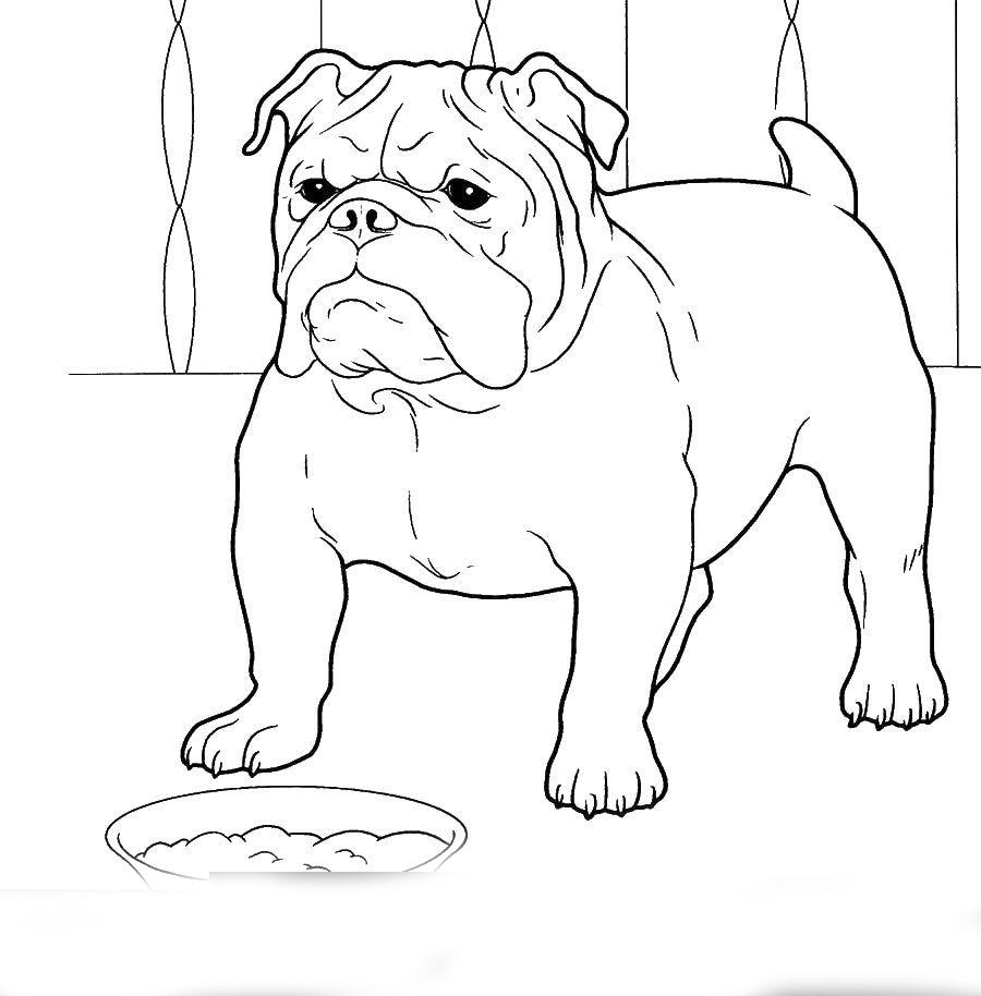 bulldog coloring page bulldog coloring pages to download and print for free page bulldog coloring