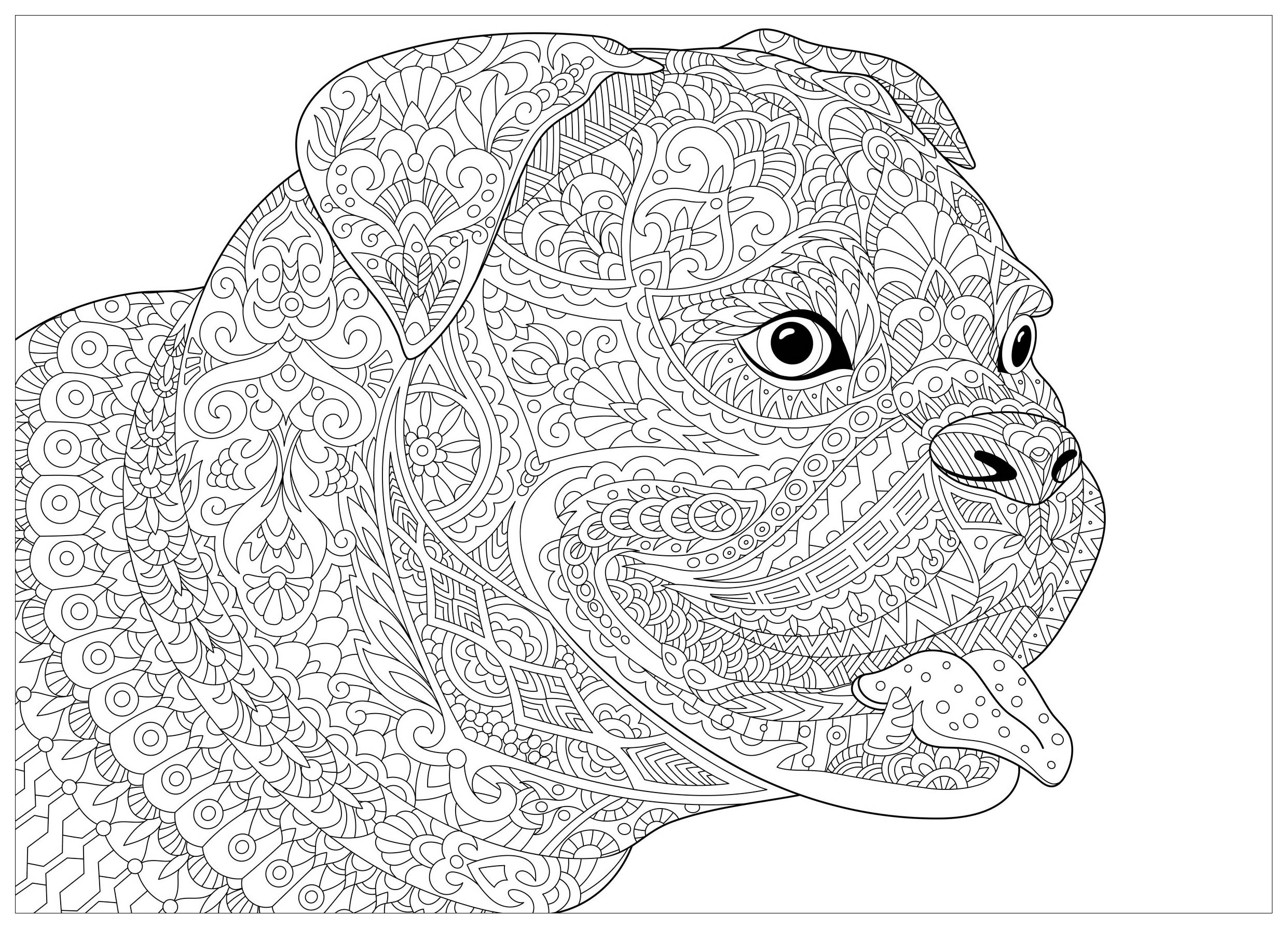 bulldog coloring page dog french bulldog dogs adult coloring pages coloring page bulldog