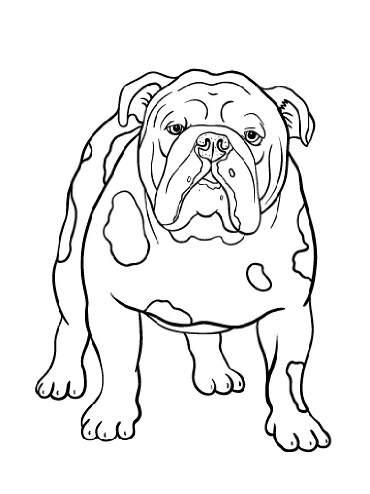 bulldog coloring page free bulldog coloring pages download and print bulldog coloring bulldog page