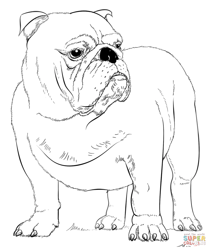 bulldog coloring page french bulldog coloring pages coloring home page bulldog coloring