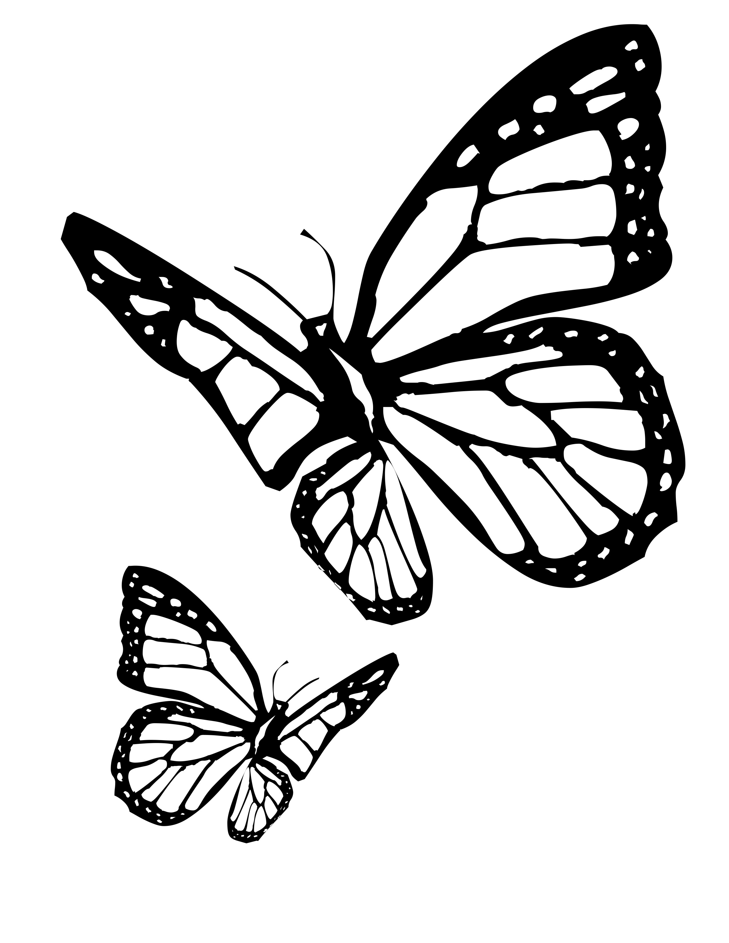 Butterfly colouring pics