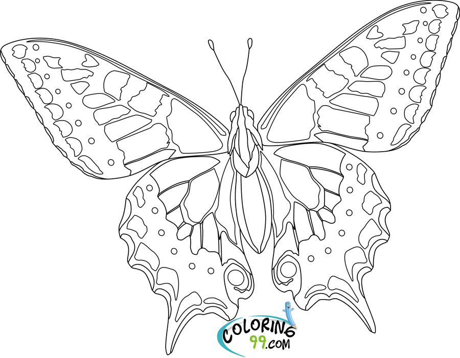 butterfly colouring pics little butterfly insects coloring pages for kids to butterfly colouring pics