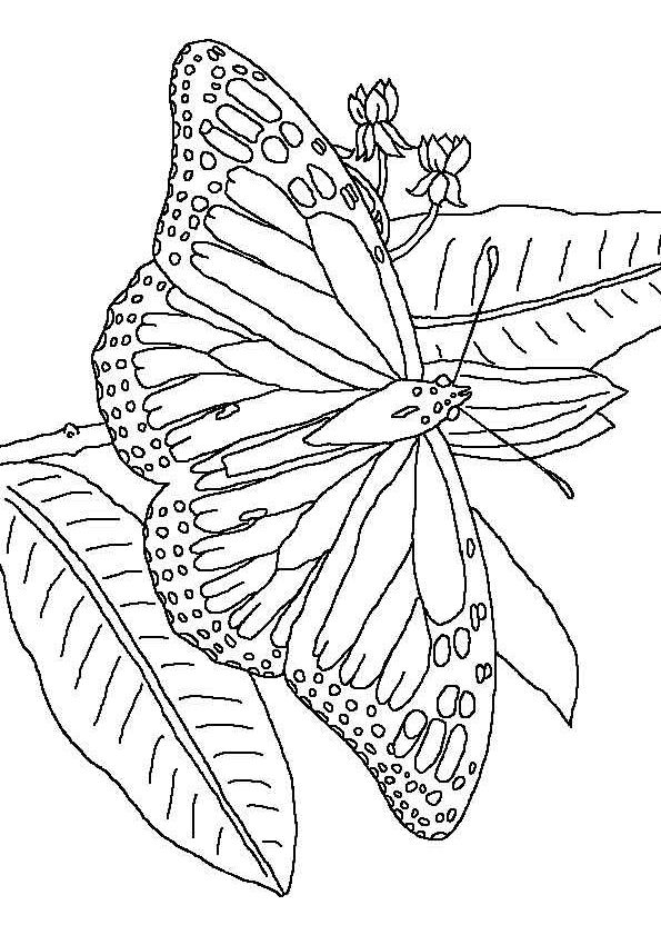 butterfly mosaic coloring page coloring page butterflies mosaic patterns coloring page butterfly mosaic coloring