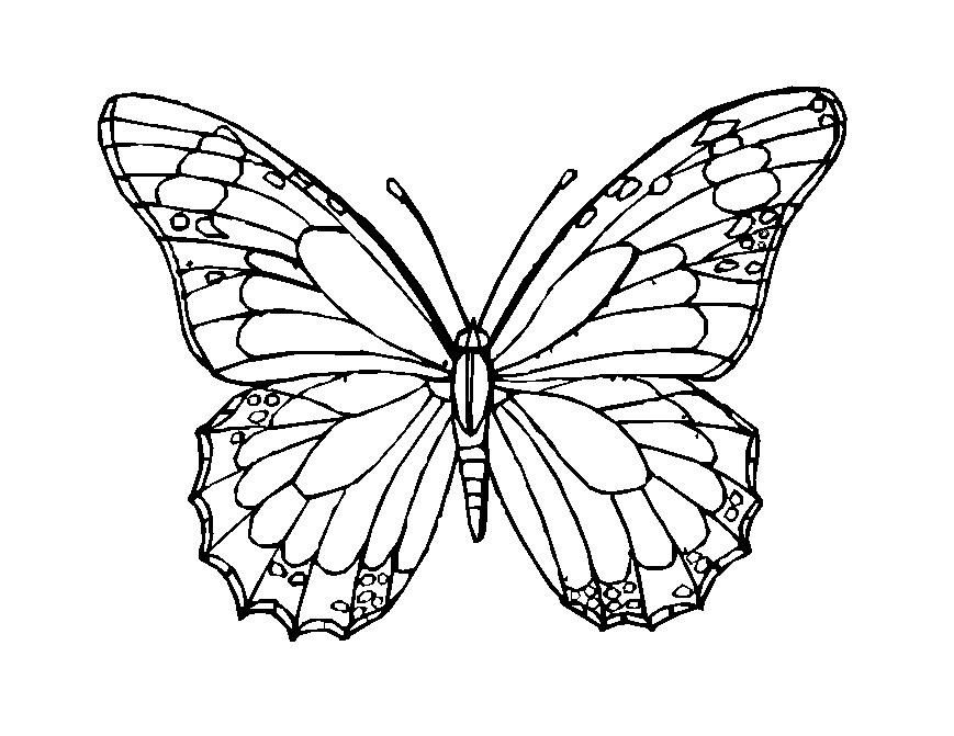 butterfly mosaic coloring page vlinders coloring pages mosaic garden art colorful page mosaic coloring butterfly