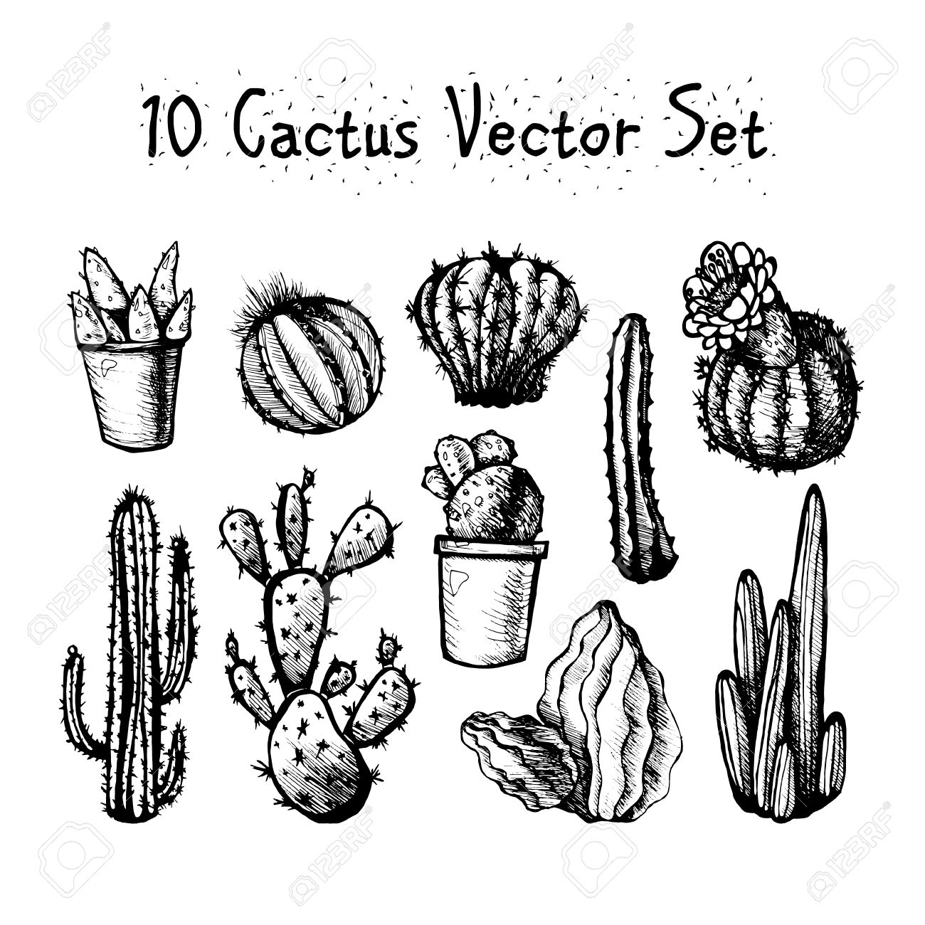 cactus drawing stuff done right drawing drawing cactus