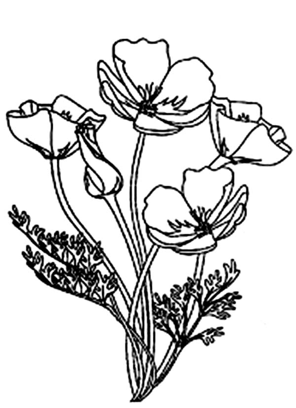 california poppy coloring page awesome drawing of california poppy coloring page kids california coloring poppy page