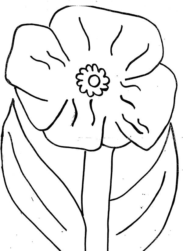 california poppy coloring page california poppy coloring page coloring pages coloring california page poppy