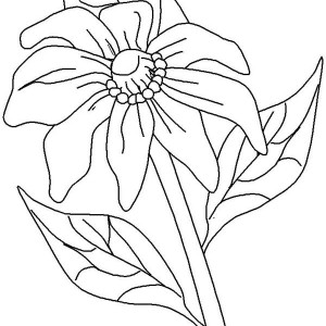 california poppy coloring page california poppy for the love one coloring page kids coloring california page poppy