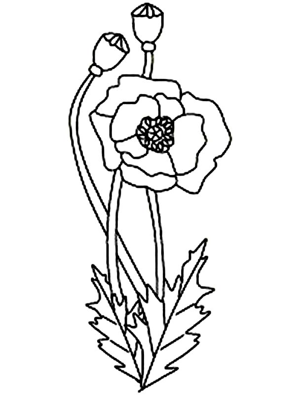 california poppy coloring page california poppy in the garden coloring page kids play color page coloring poppy california