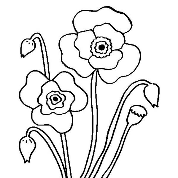 california poppy coloring page california poppy picture coloring page kids play color california page coloring poppy