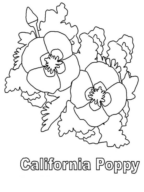 california poppy coloring page california poppy with pointy leaves coloring page kids poppy california page coloring