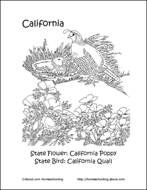california state flower gallery for gt california poppy outline poppy drawing california flower state