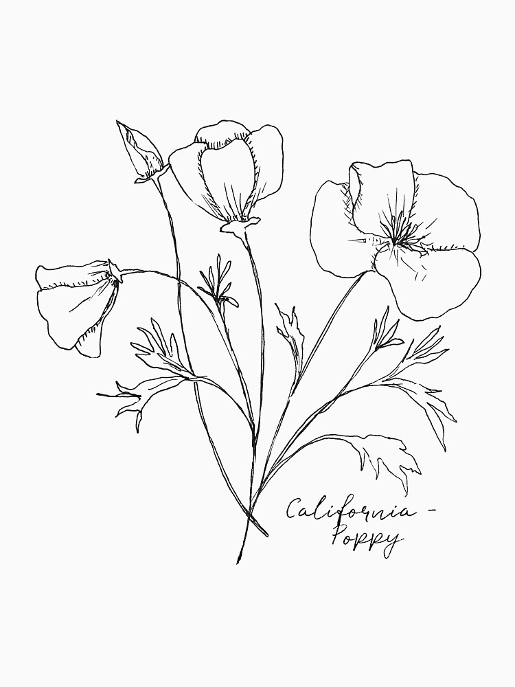 california state flower state flower coloring pages california state flower flower california state