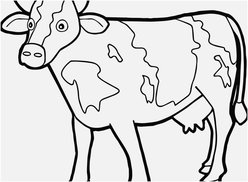 cartoon cow coloring pages cow coloring page cow drawing cow coloring pages cartoon pages cow coloring