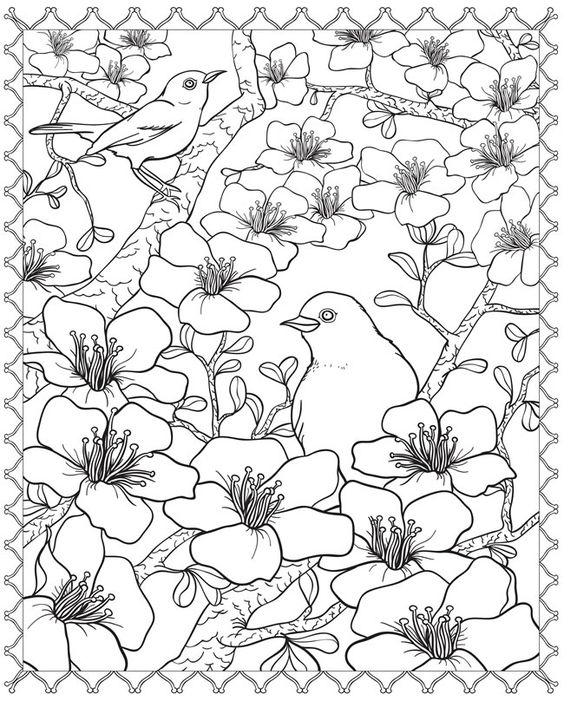 cherry blossom coloring pages cherry blossom coloring page elegant digital printable blossom coloring cherry pages