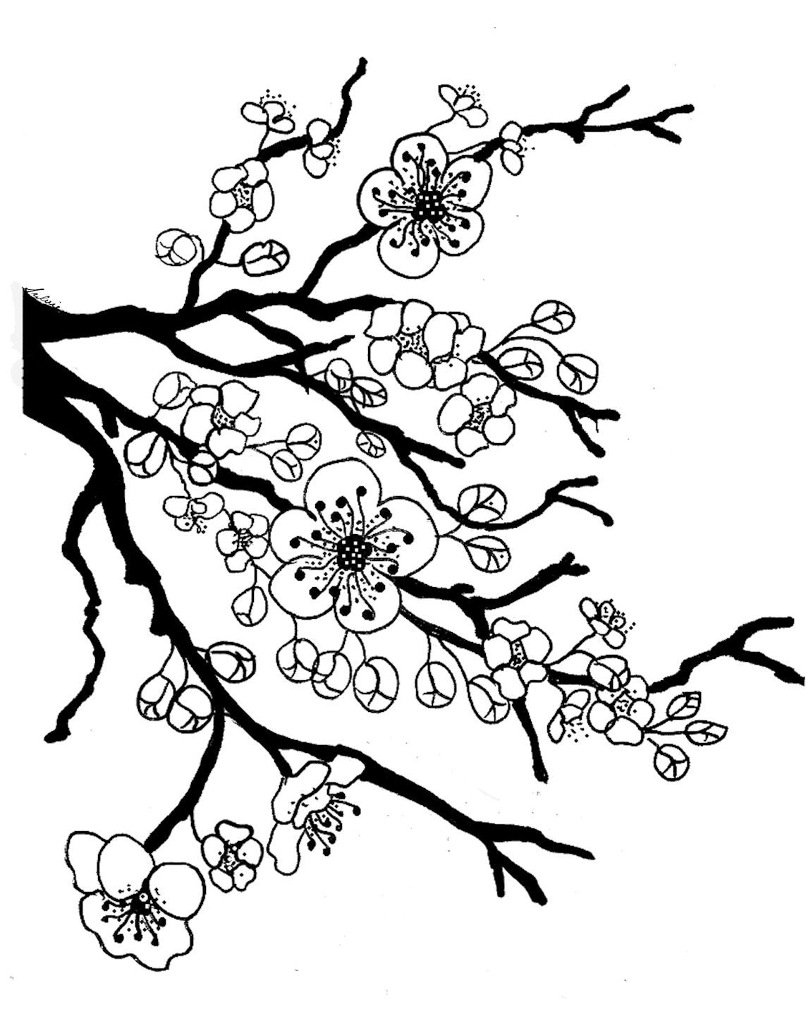 cherry blossom coloring pages cherry blossom tree drawing at getdrawings free download coloring cherry pages blossom