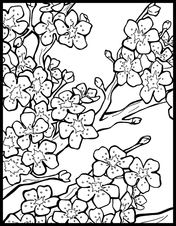 cherry blossom coloring pages cherry blossom tree drawing step by step at getdrawings coloring pages blossom cherry