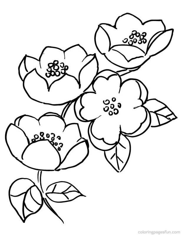cherry blossom coloring pages cherry blossoms coloring pages coloring home pages blossom coloring cherry