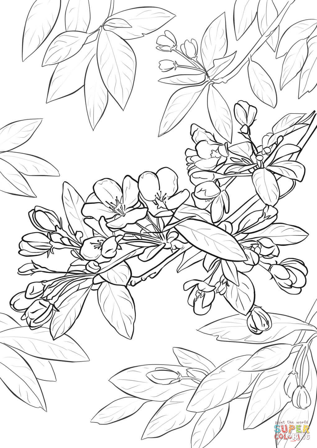cherry blossom coloring pages free printable cherry blossom adult coloring page blossom pages coloring cherry