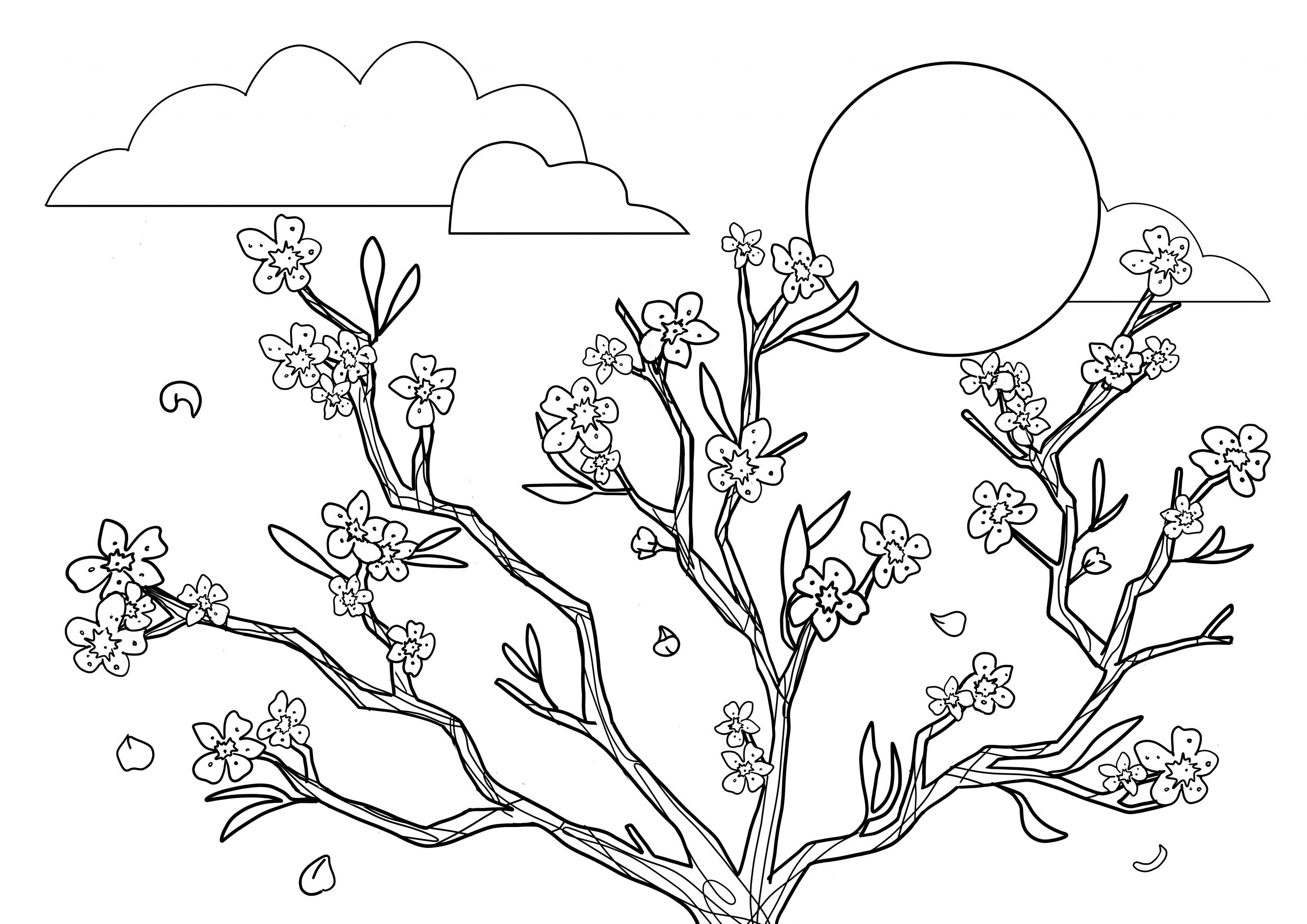 cherry blossom coloring pages free vintage plum blossom image vintage free and drawings coloring pages cherry blossom
