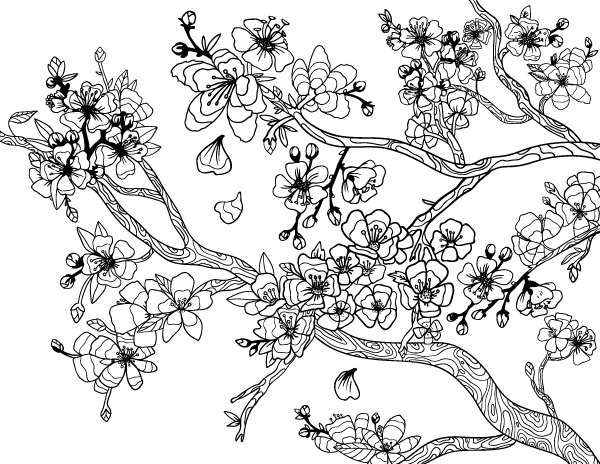 cherry blossom coloring pages japanese cherry blossom tree coloring coloring pages coloring pages blossom cherry